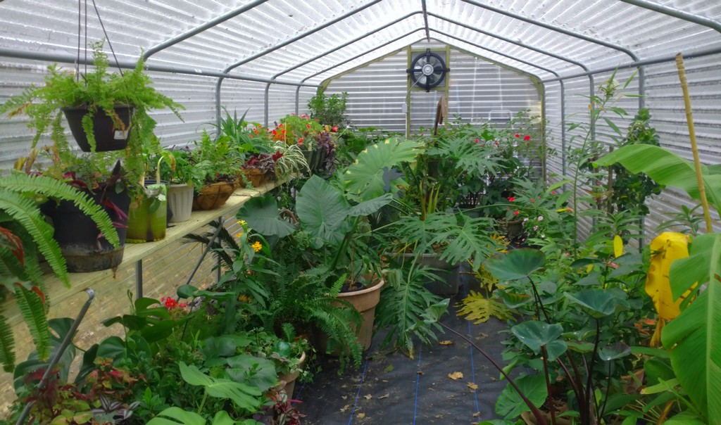 Hothouse for sale